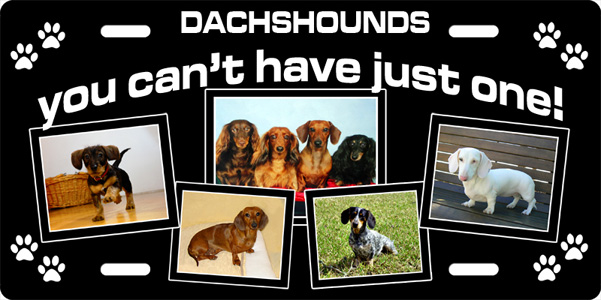 Deluxe Photo Plate, Dachsunds License Plate, Deluxe Photo Plate, Dachsunds License Tag