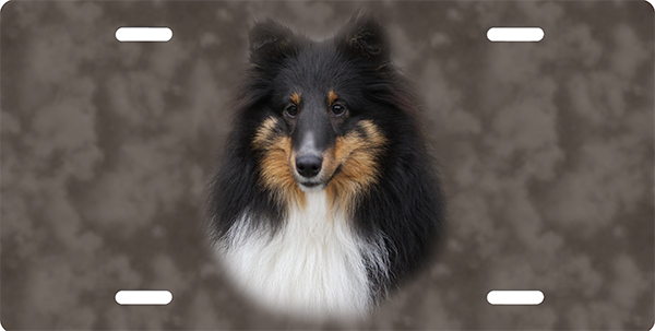 Tri Colored Sheltie License Plate License Plate, Tri Colored Sheltie License Plate License Tag